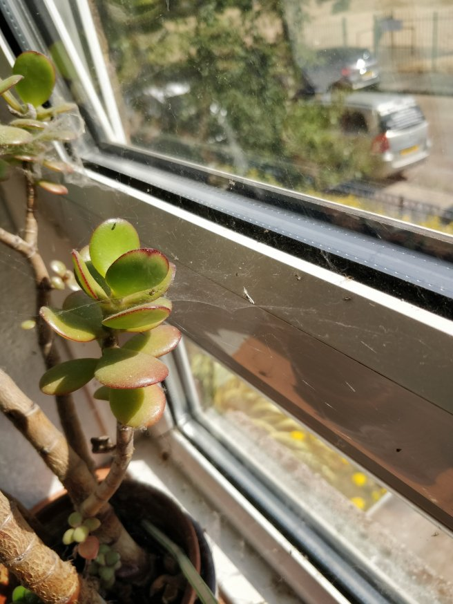 Closeup of spiderweb between plant and window