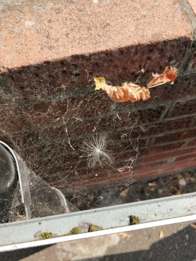Closeup of spiderweb between wall and sign