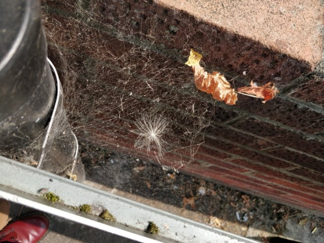 Closeup of spiderweb between wall and sign - different angle
